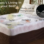 amazing mattress cleaning services