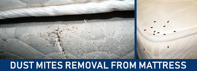 Dust Mites Removal From Mattress Melbourne