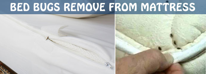 Professional Mattress Cleaning Services Charleston