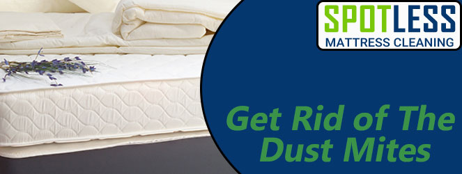 Get Rid of The Dust Mites