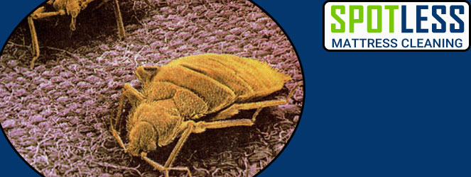 Professional Dust Mites Treatments Service
